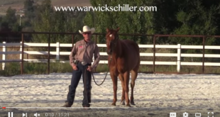 Horse Training Video Picture
